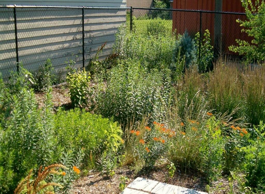 rain-garden2-1024x750.jpg