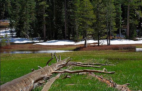 Summit meadow, Yosemite national park