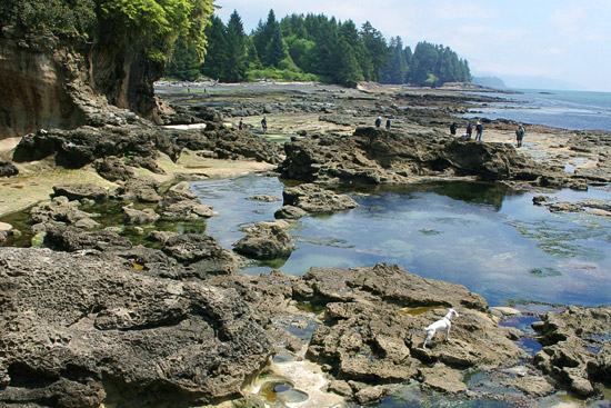Botanical beach British Columbia