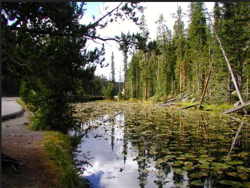Isa lake, craig pass, yellowstone national park