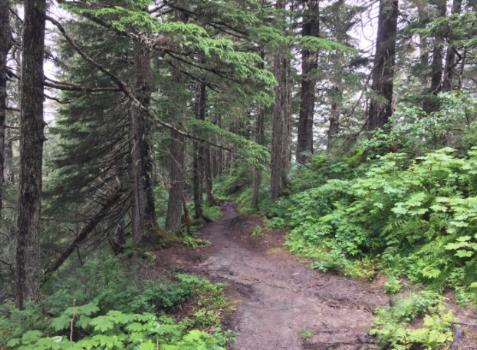 Mount roberts trail, alaska