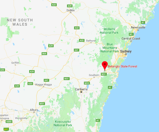 Bellanlgo State Forest, New South Wales