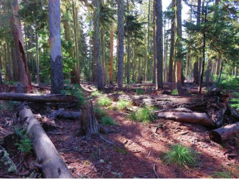 Frog Lake Trail Mount Hood National Forest