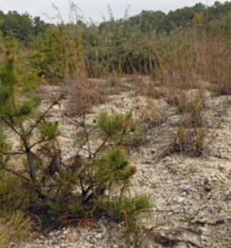 warren grove
