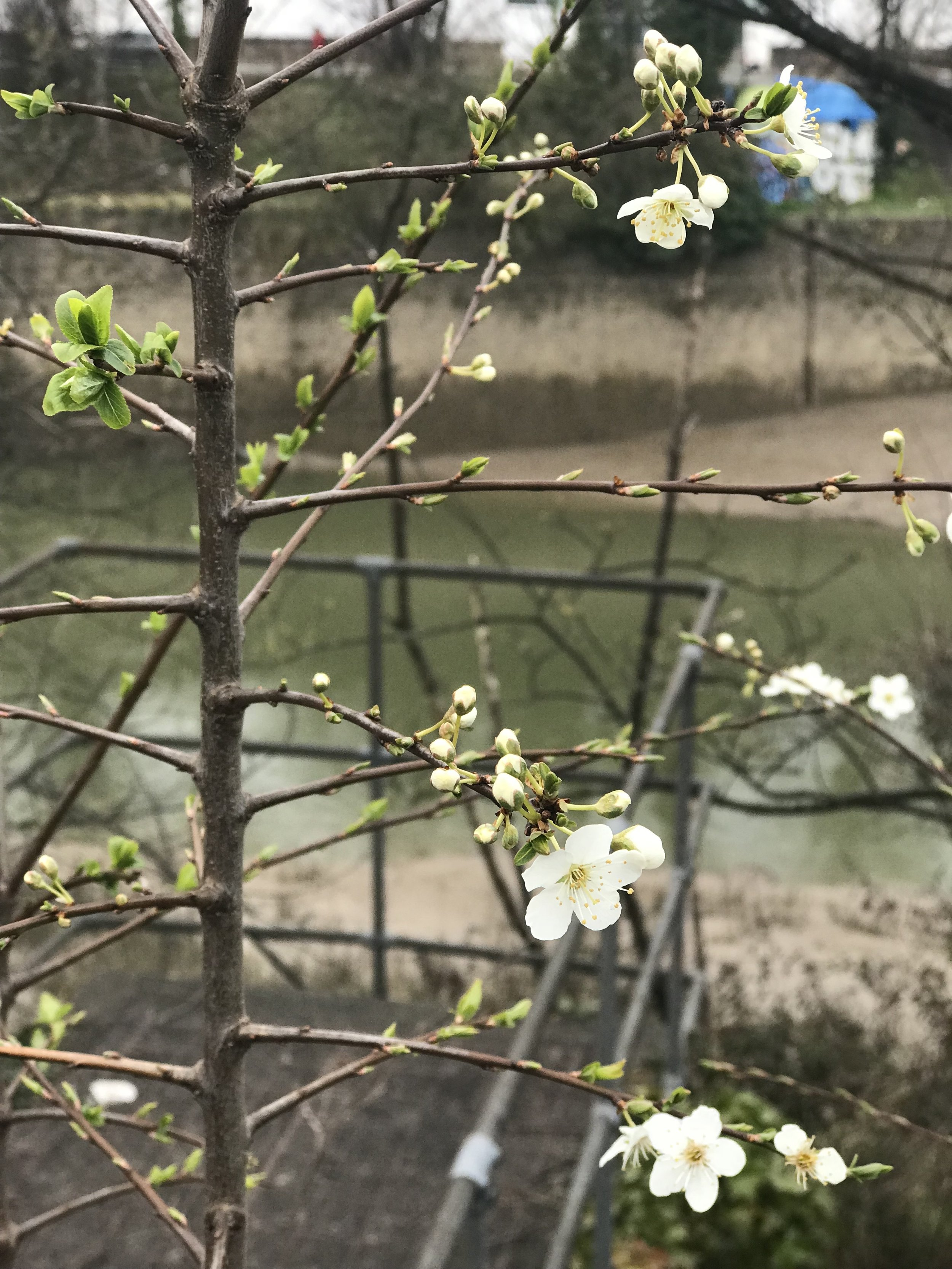 spring finally