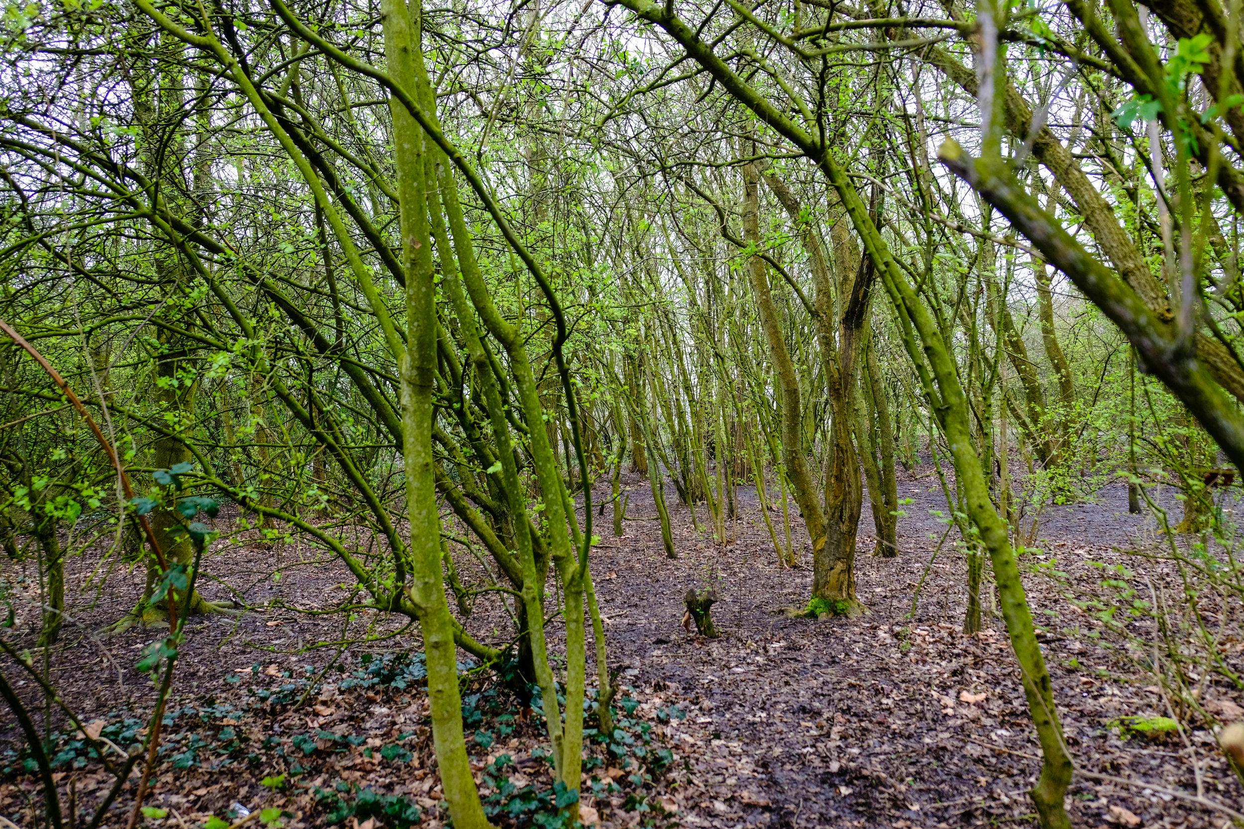 grove.jpg