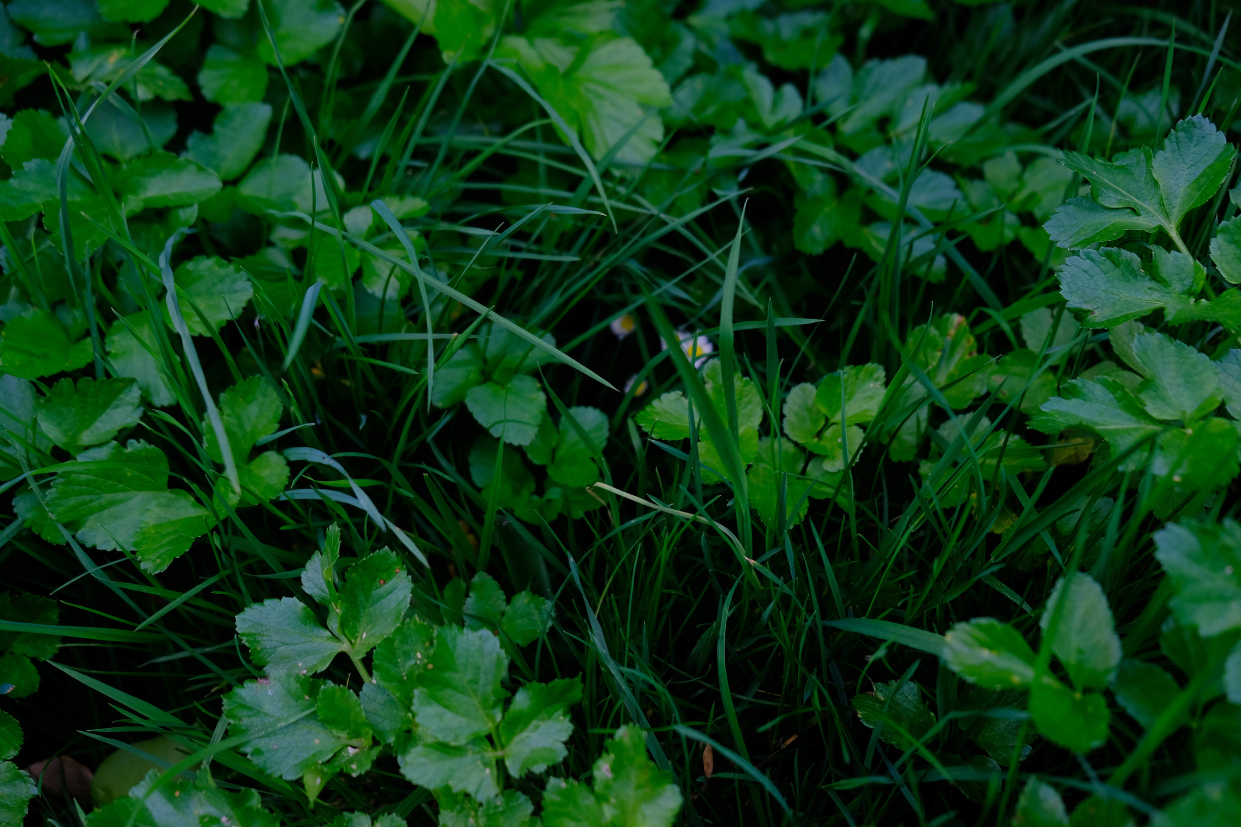 greenness.jpg
