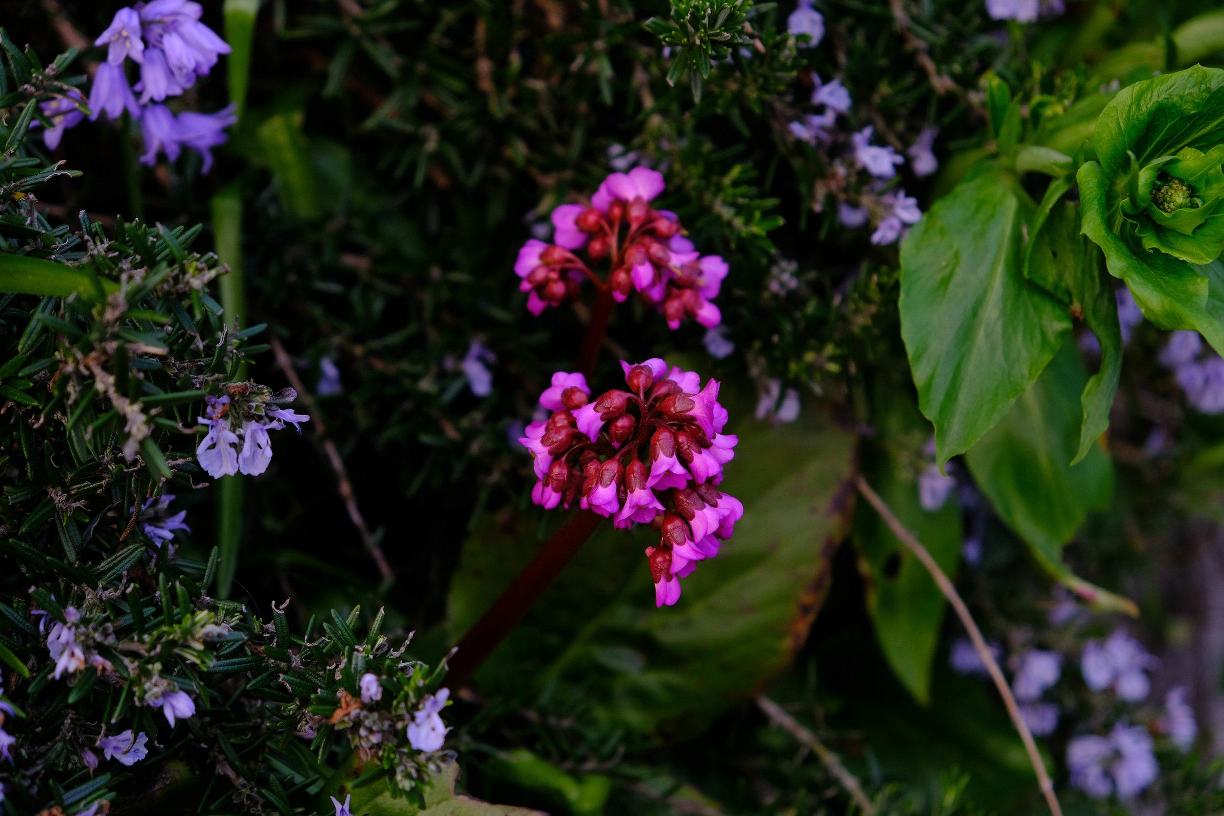 glowflowers.jpg