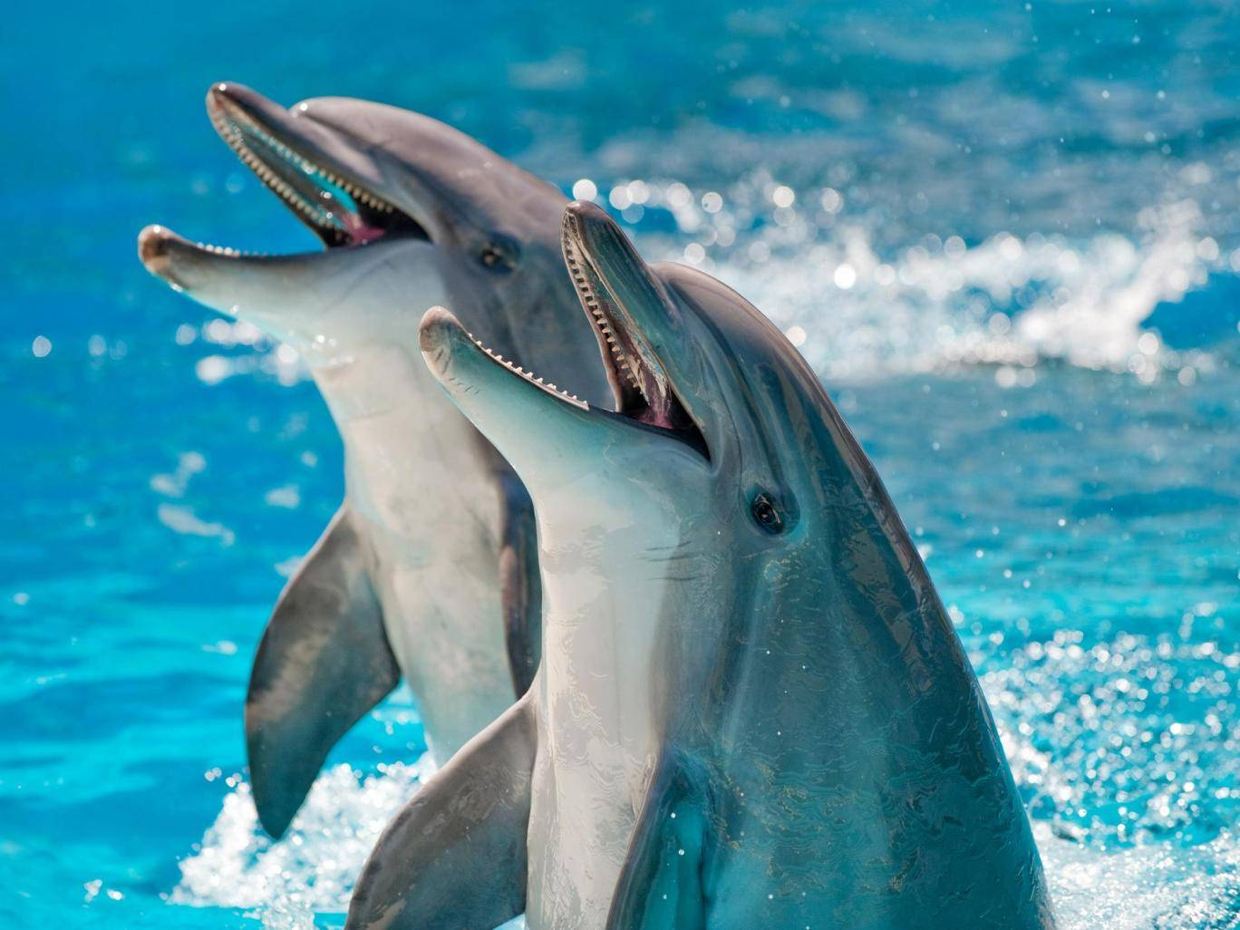 Scientists were able to listen in on the dolphin population of the Gulf of Mexico using underwater sensors Getty Images
