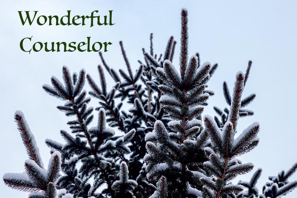 evergreen tree main_wonderful counselor.jpeg