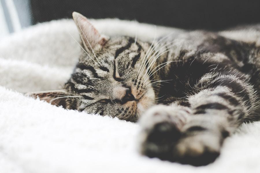 sleeping kitty.jpg
