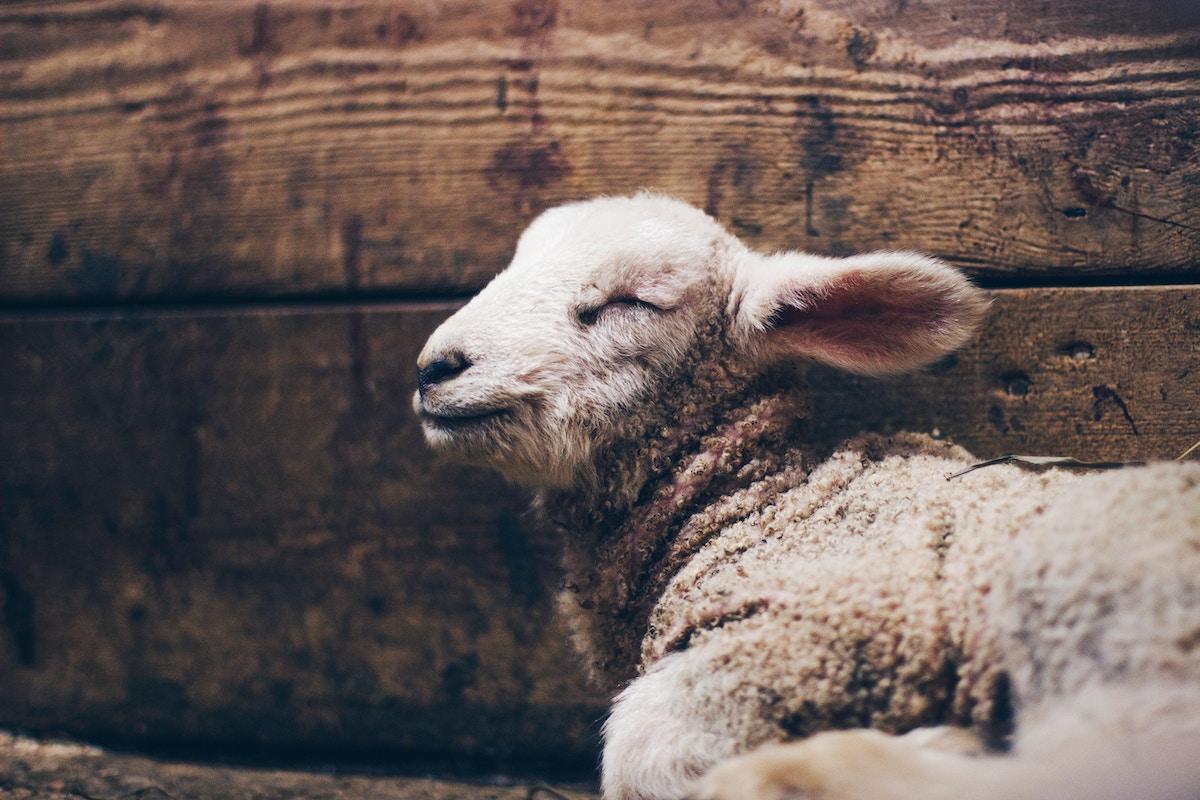 91 Behold the Lamb.jpg