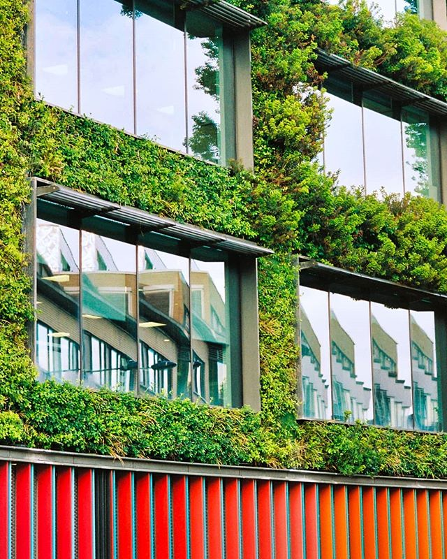 Imagine if every building in every city had these living walls, what an awesome place the world would be