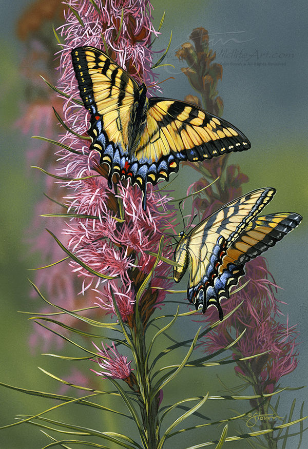 Tigertails II.jpg