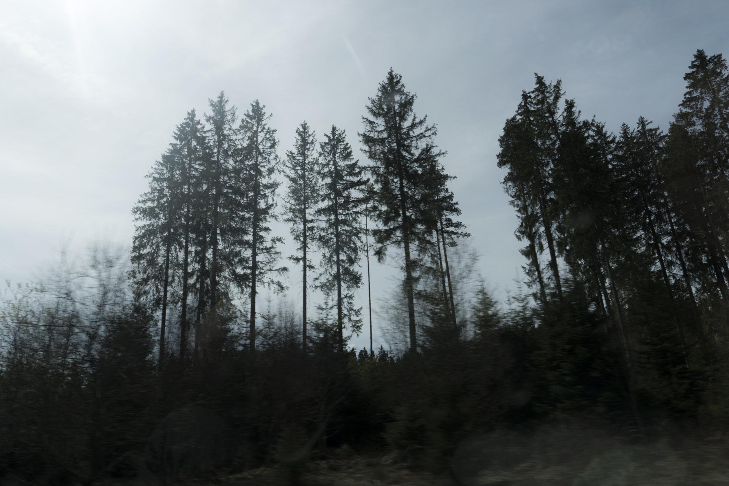 Il était une fois... - Au coeur d'une Forêt de légendes