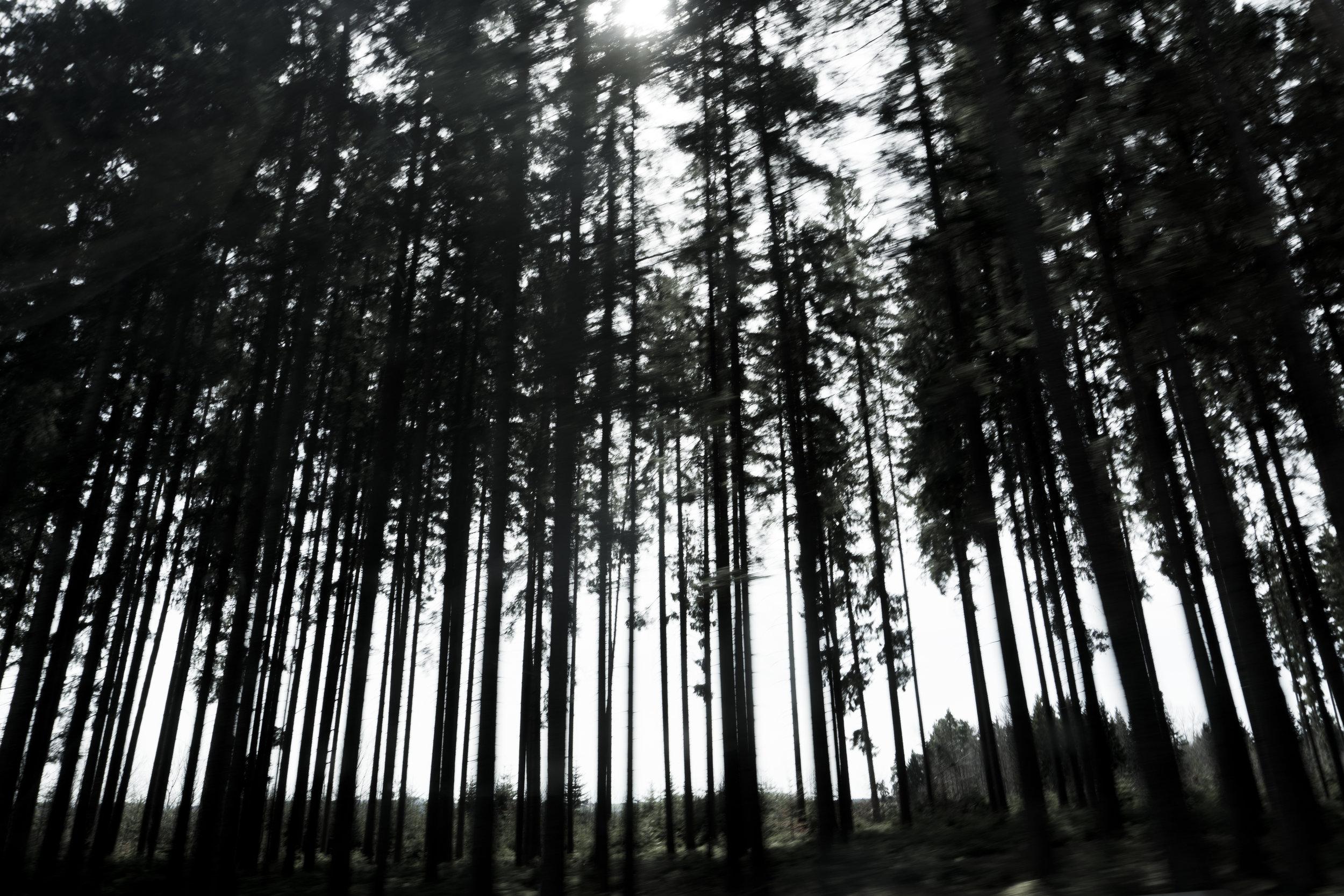 Atmosphère - où quand les sapins montent la garde en rangs serrés et sombres...