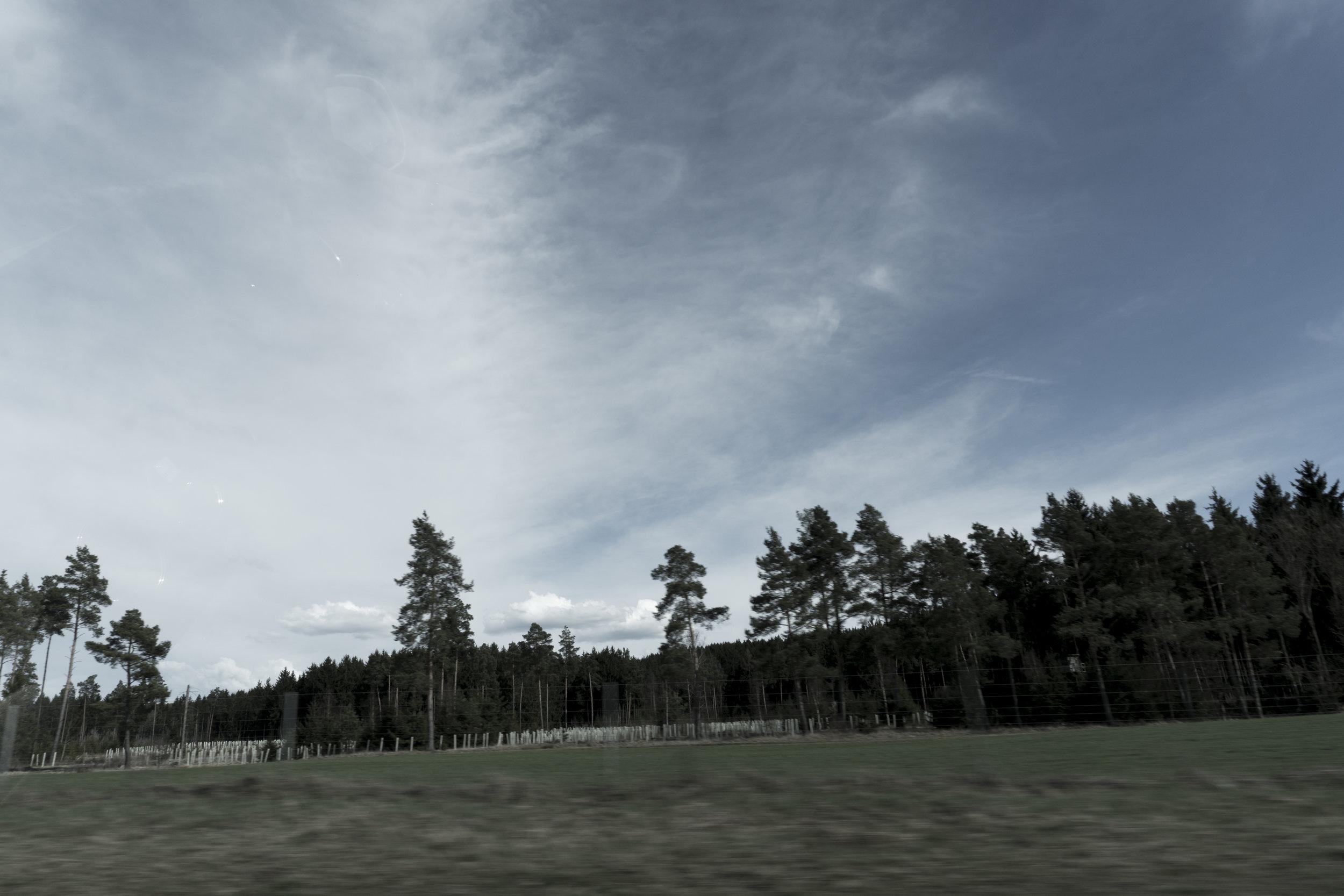 Lorsque les arbres se font présence - les contes de notre enfance prennent vie...