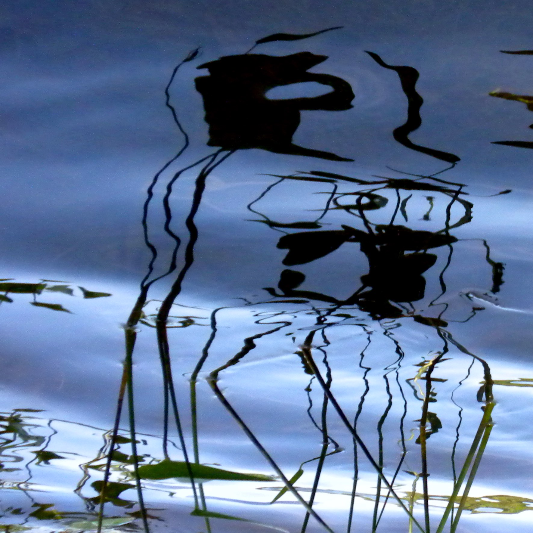 Pond Drawing D