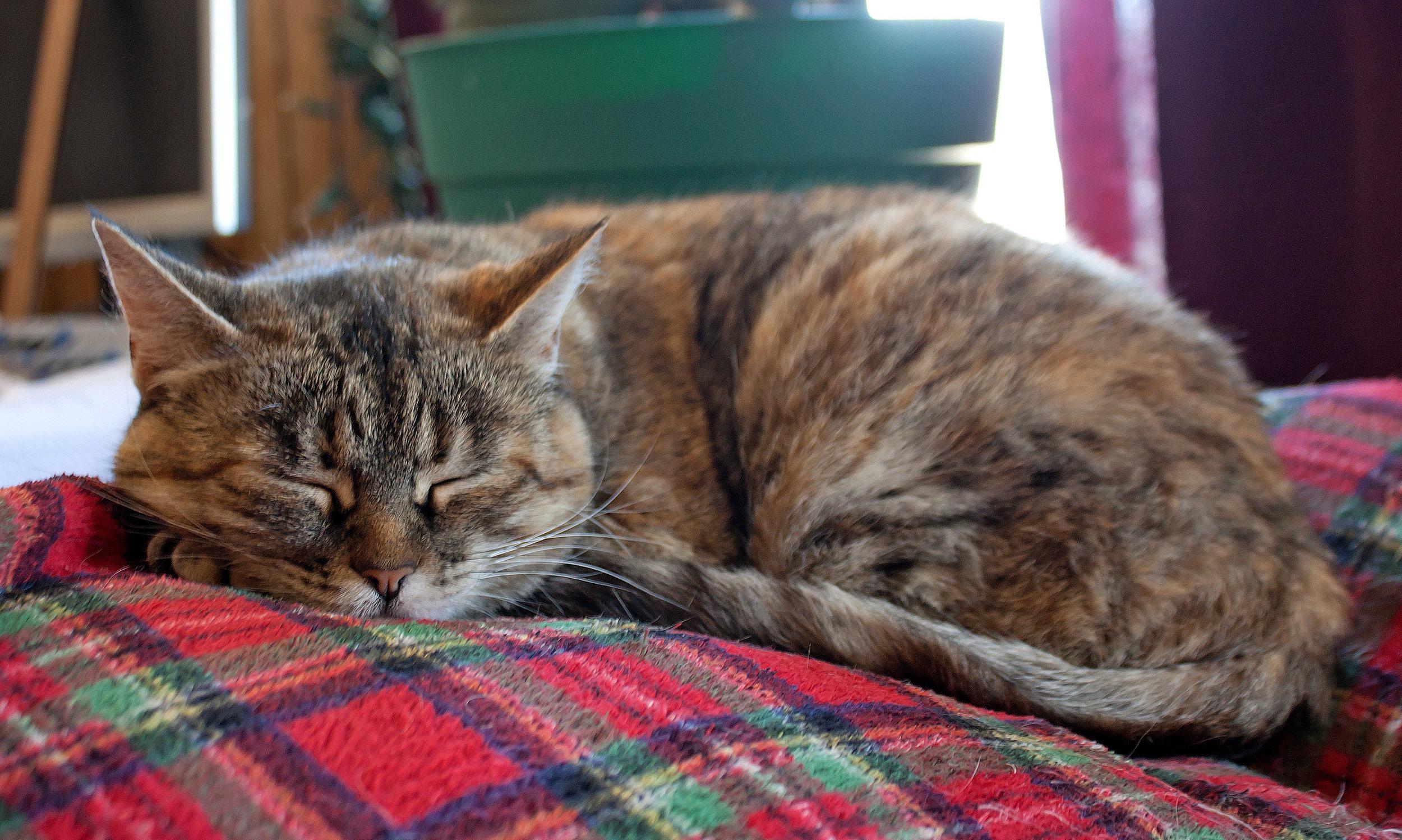 cat-sleeping-on-blanket_G1YFOIOd.jpg