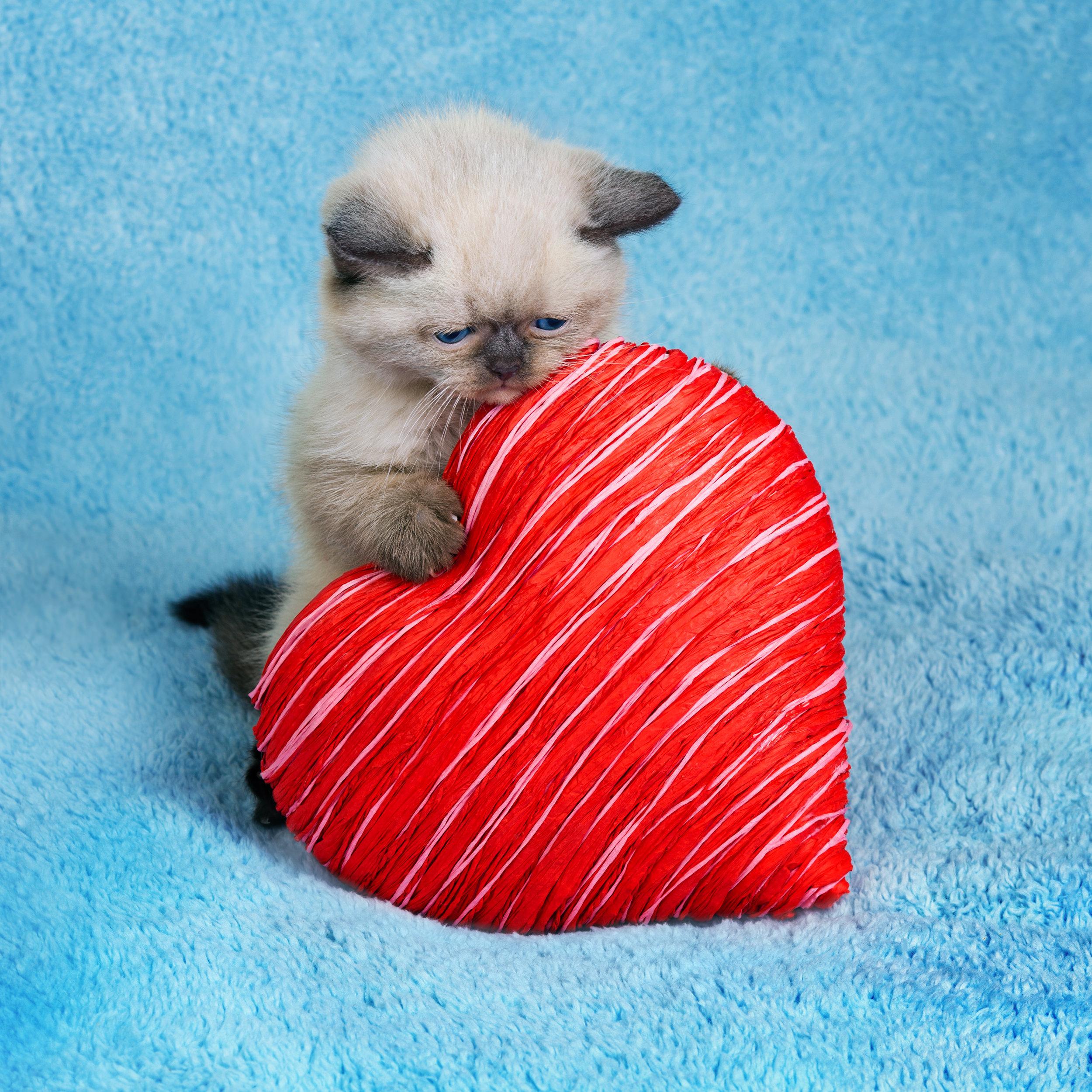 kitten w heart.jpg