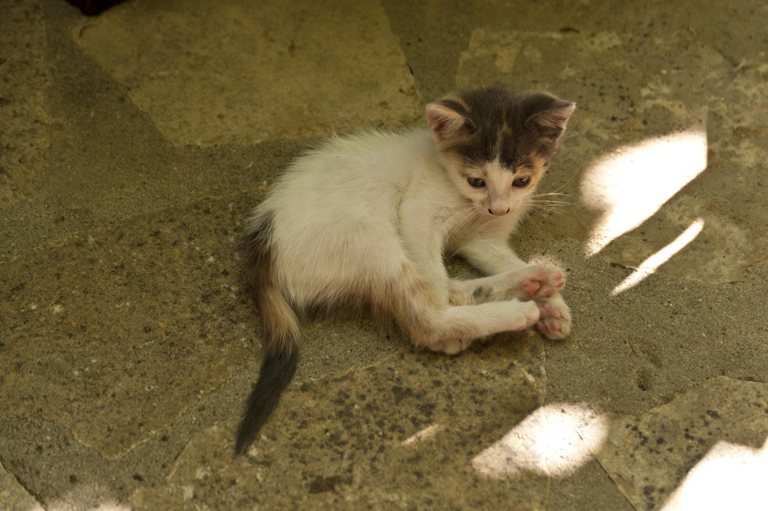kitten-on-samos_GJL5h7c_.jpg