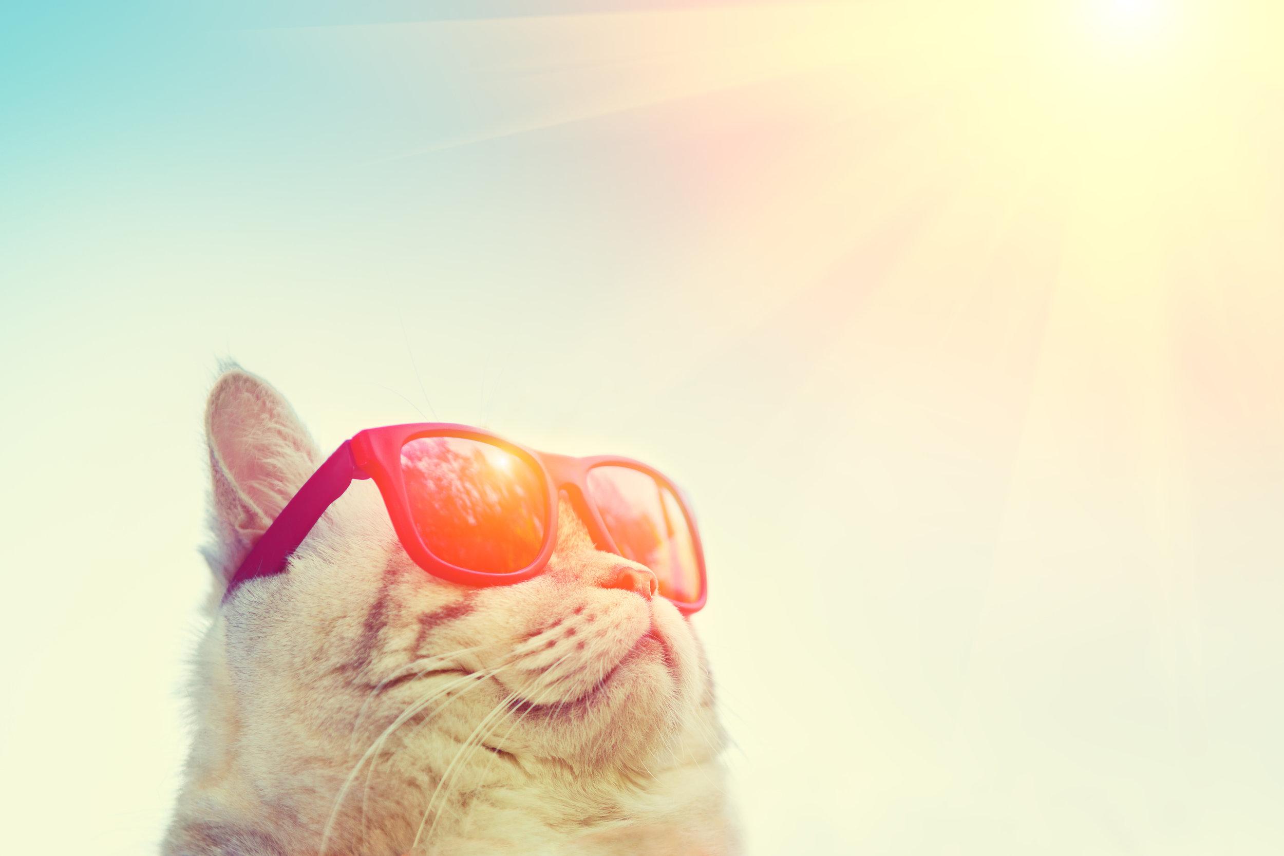 storyblocks-portrait-of-cat-wearing-sunglasses-against-sky-looking-at-the-sun_SAMXxXK1z.jpg