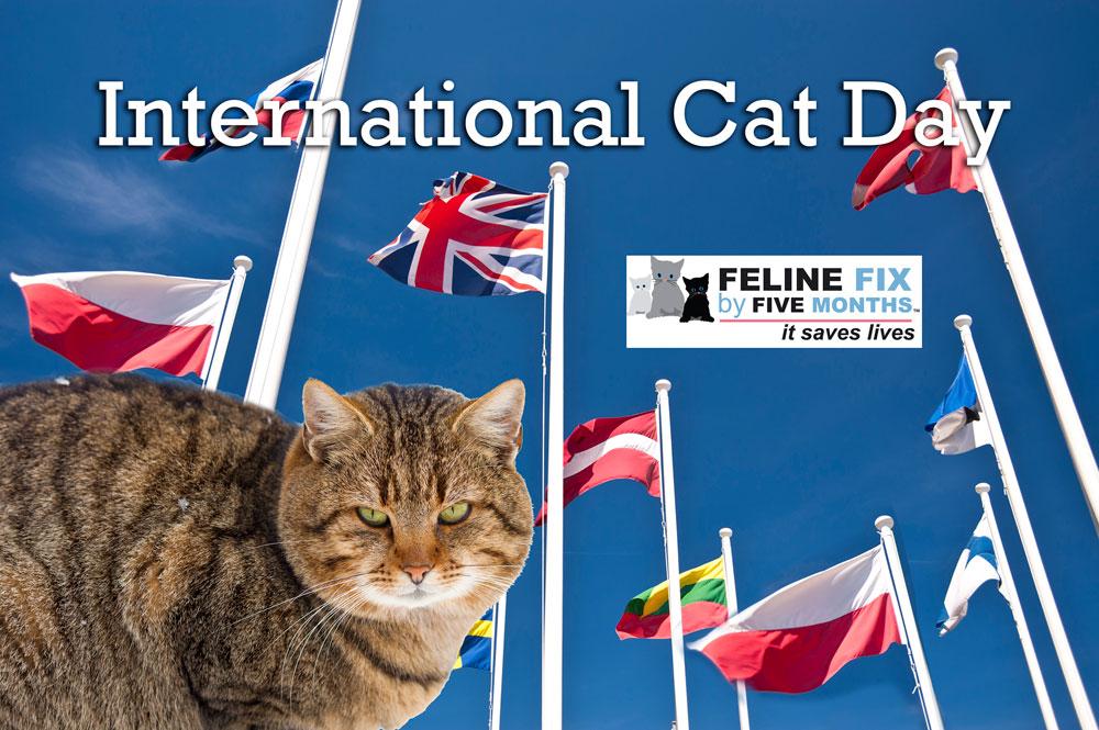 August 6 International-Cat-day-for-blog.jpg