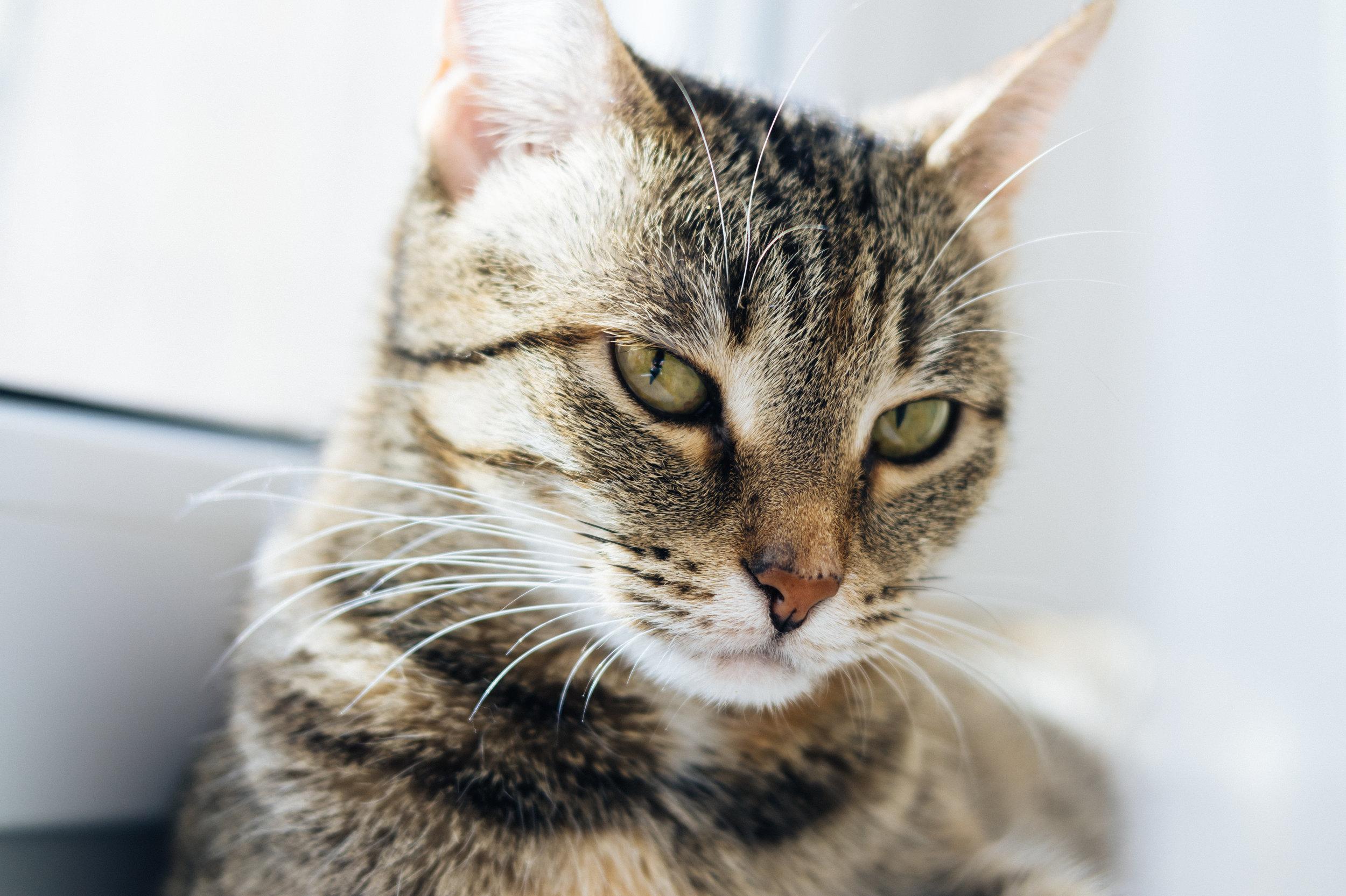 graphicstock-light-portrait-of-a-cat-on-the-window_rW8g9_shw-.jpg