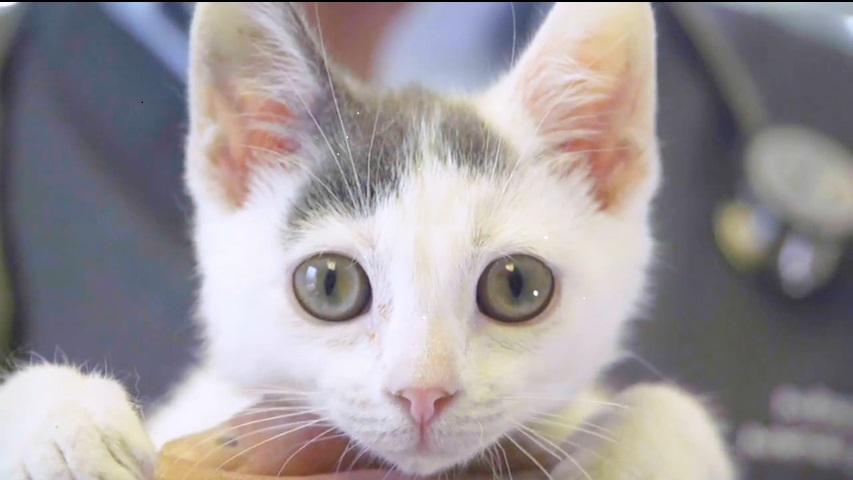 cat-image.png