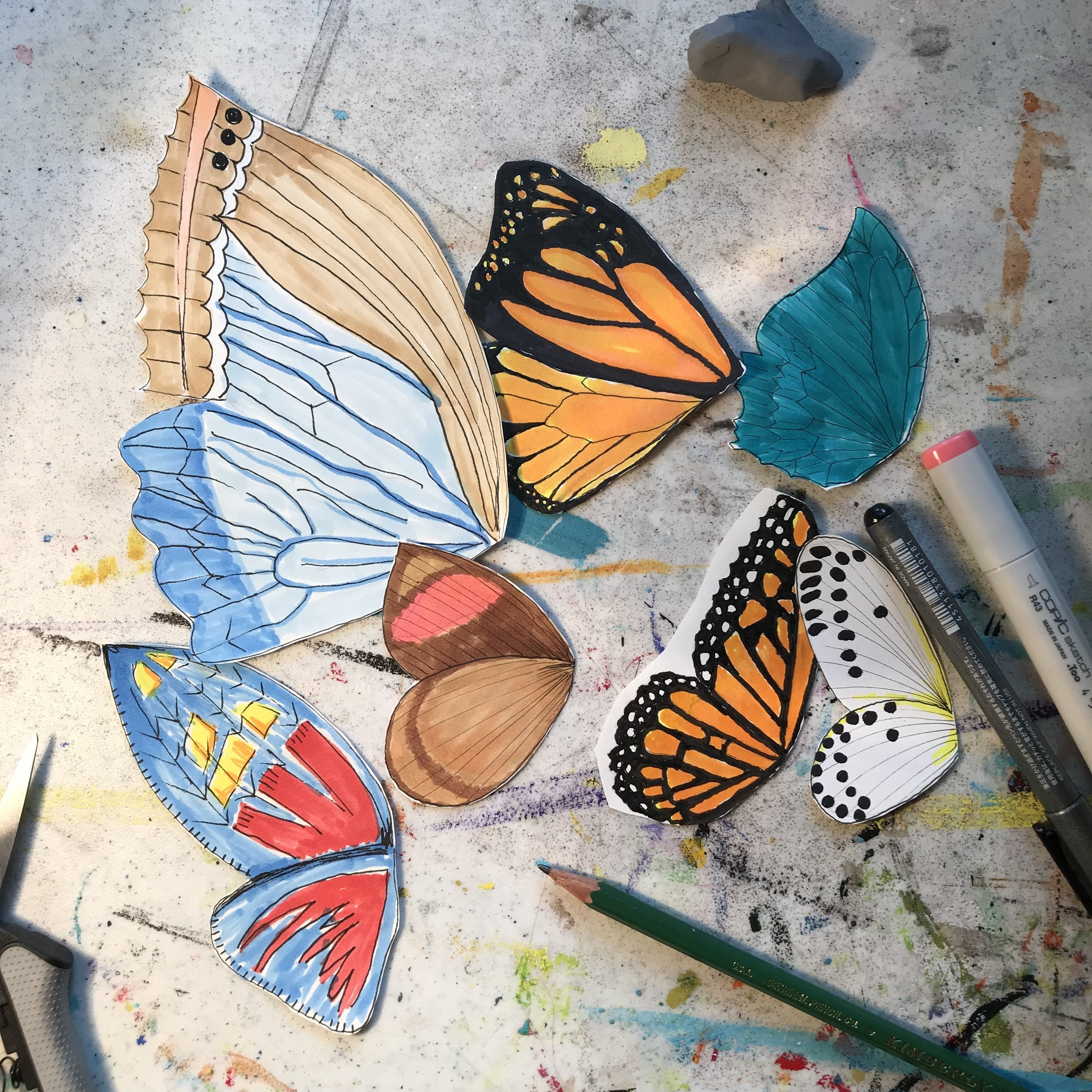 butterfly wing sketches