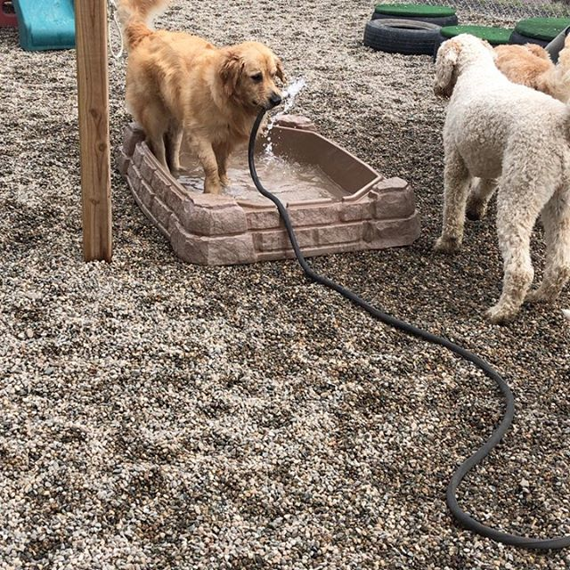 Fun time with water #happyhomesdog #dogdaycare #postivetraining