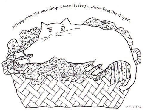 virginiahalstead.com/Blog/Cat-helps-with-laundry.jpg