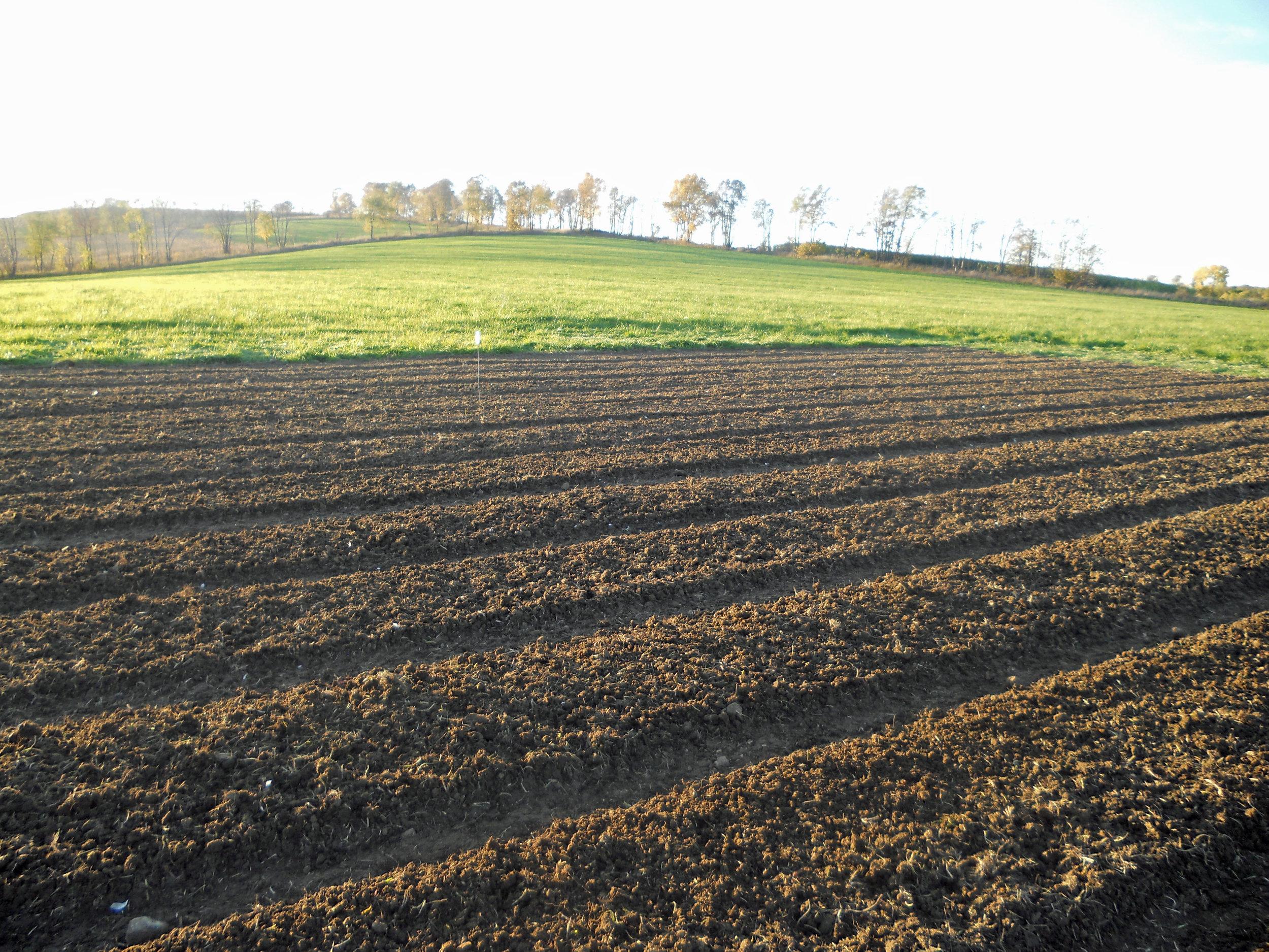 beautifully worked land.