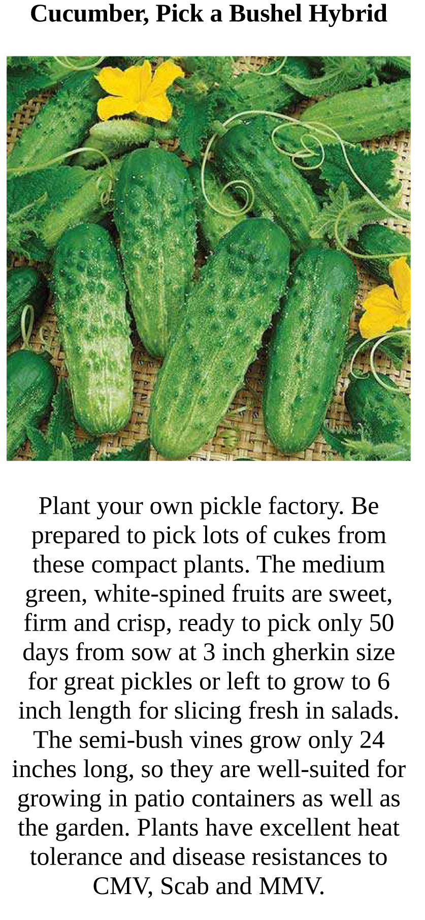 Plant #3.jpg