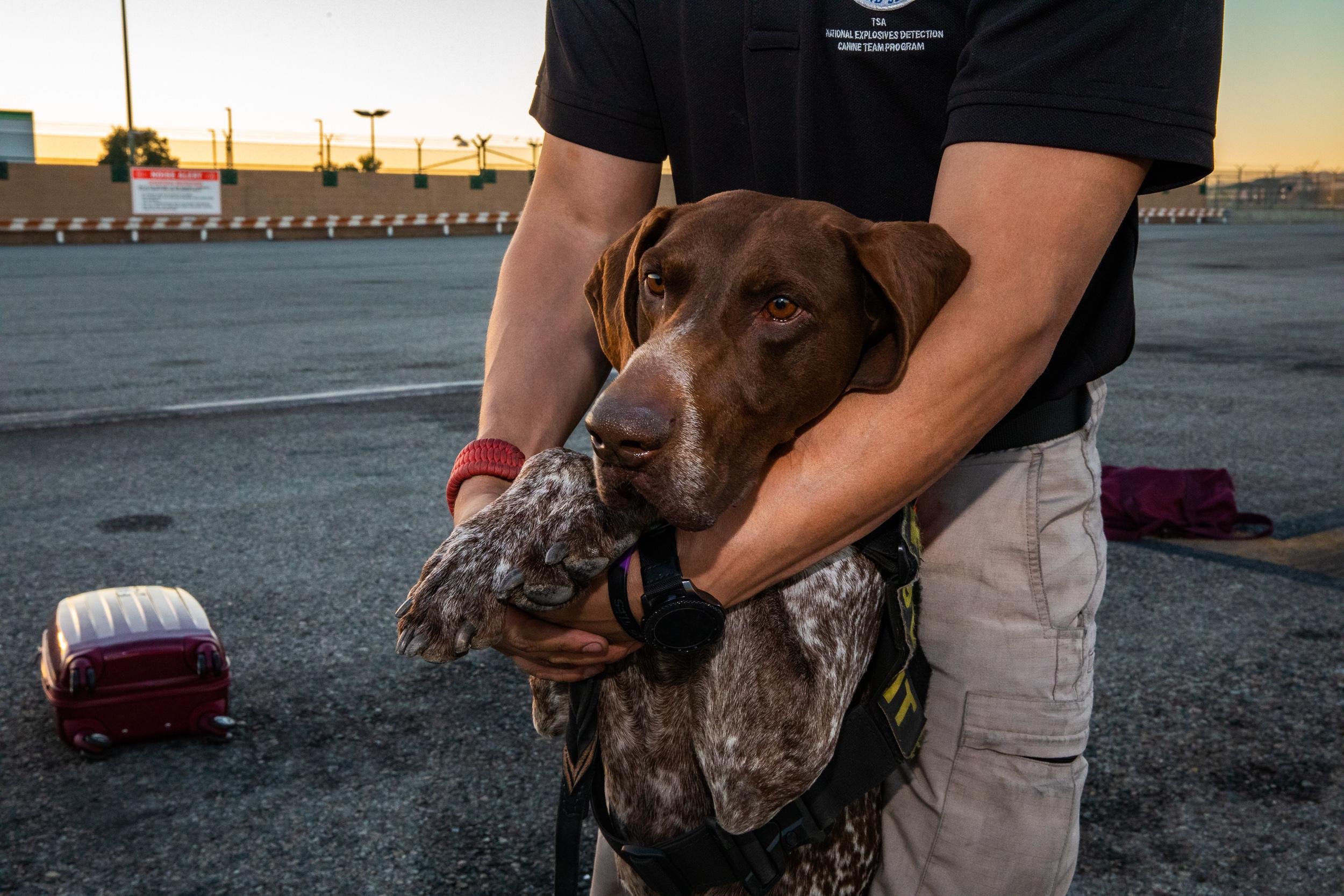 Tara Parekh TSA Canine LAX Photographs-02.jpg