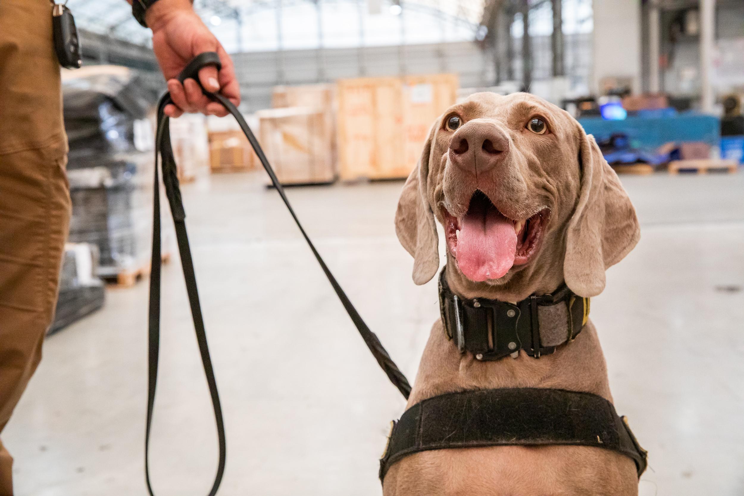 Tara Parekh TSA Canine LAX Photographs-05.jpg