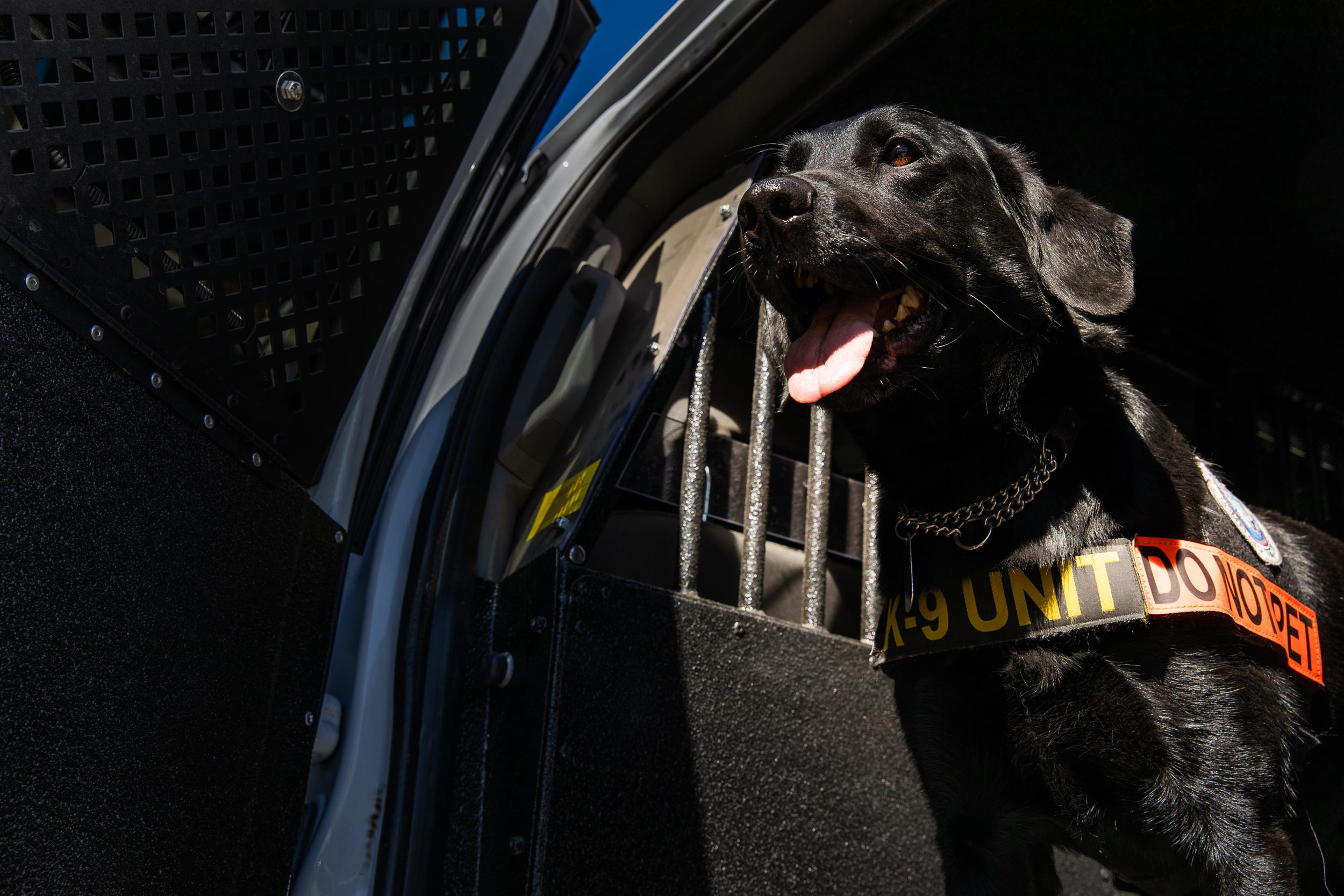 Tara Parekh TSA Canine LAX Photographs-07.jpg