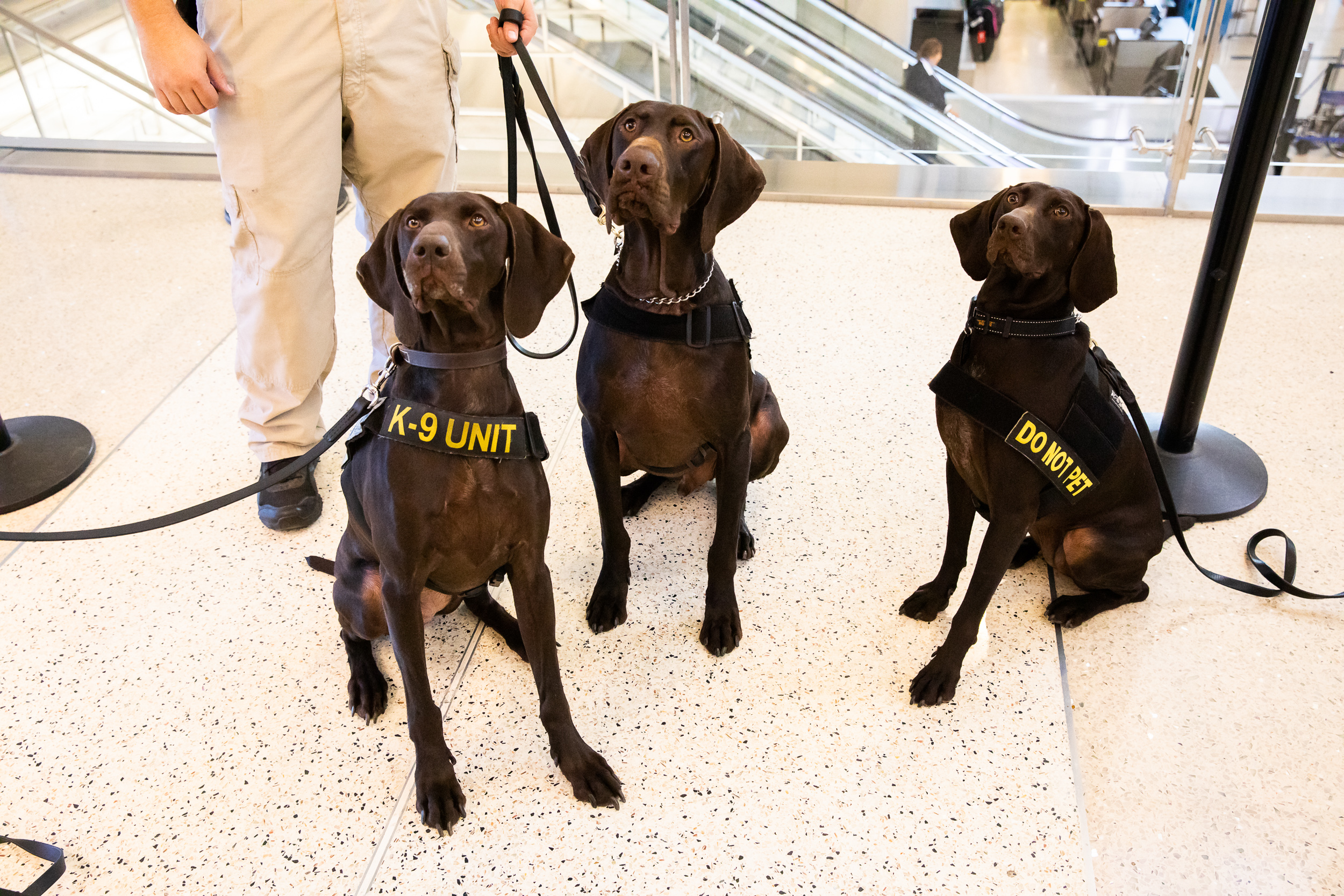 Tara Parekh TSA Canine LAX Photographs-08.jpg