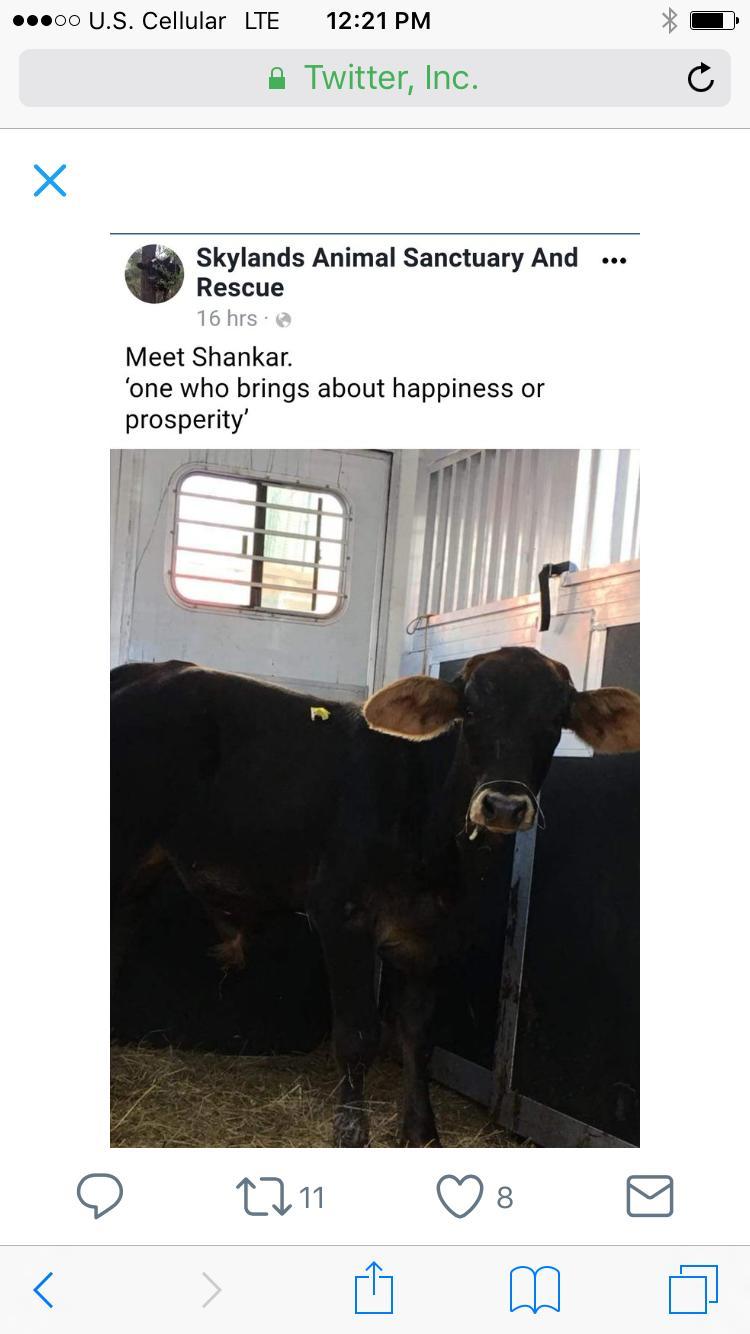 cow net3.jpg