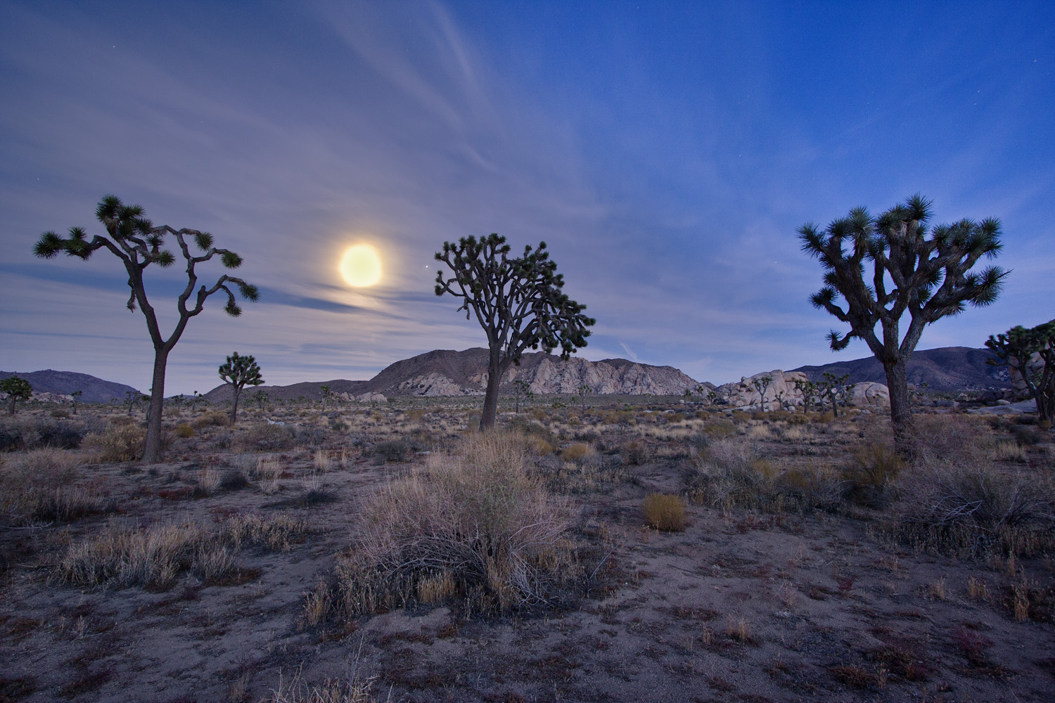 Three Joshua Trees under the Full Moon
