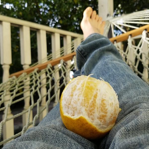 Lemon in a hammock, New Orleans, Louisiana, 2016