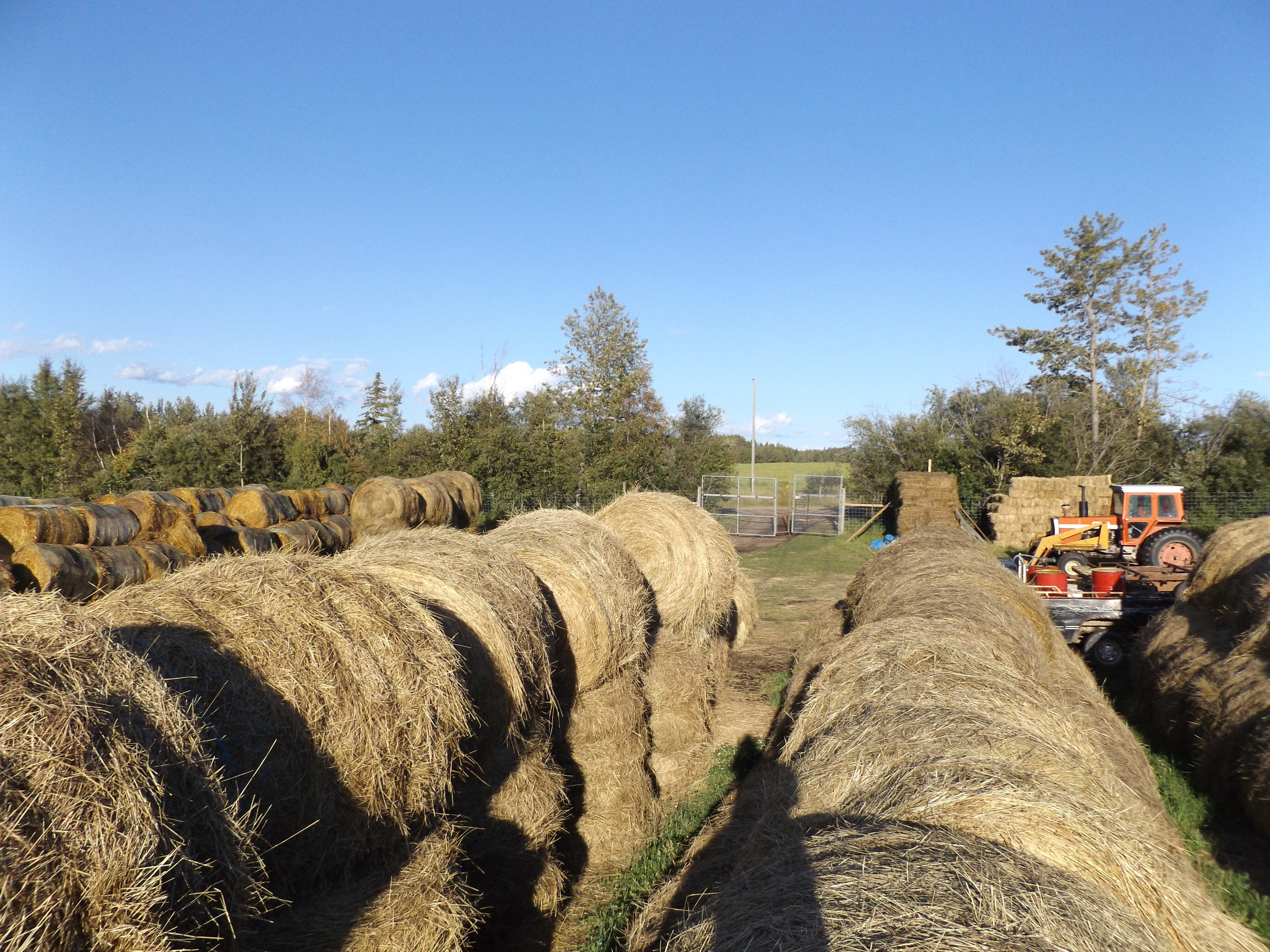 Stockpiled hay for winter feeding