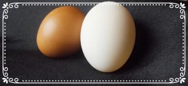 White Duck Egg