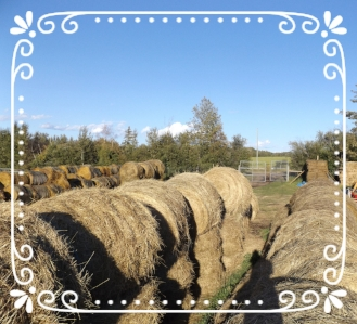 Hay bales stacked in the bale yard ready for winter feeding.