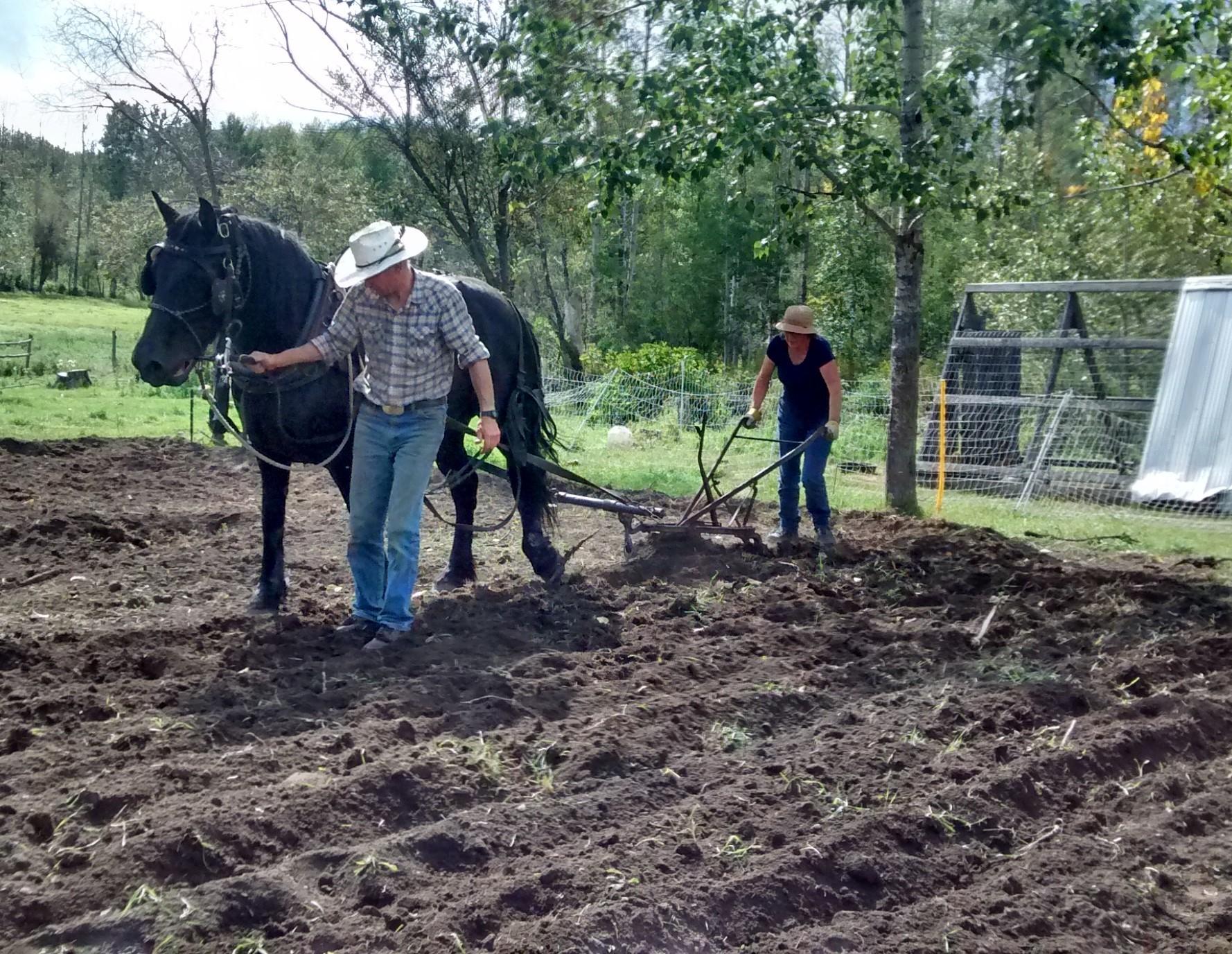 Planting Potatoes.jpg