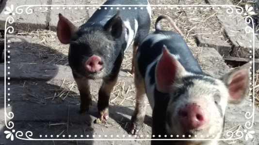 Bacon Seeds!