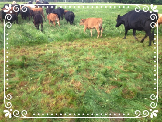 Happy Cows moving to a fresh salad bar!