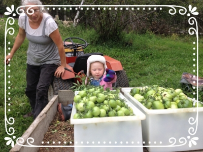 """""""Look at all those green tomatoes."""""""