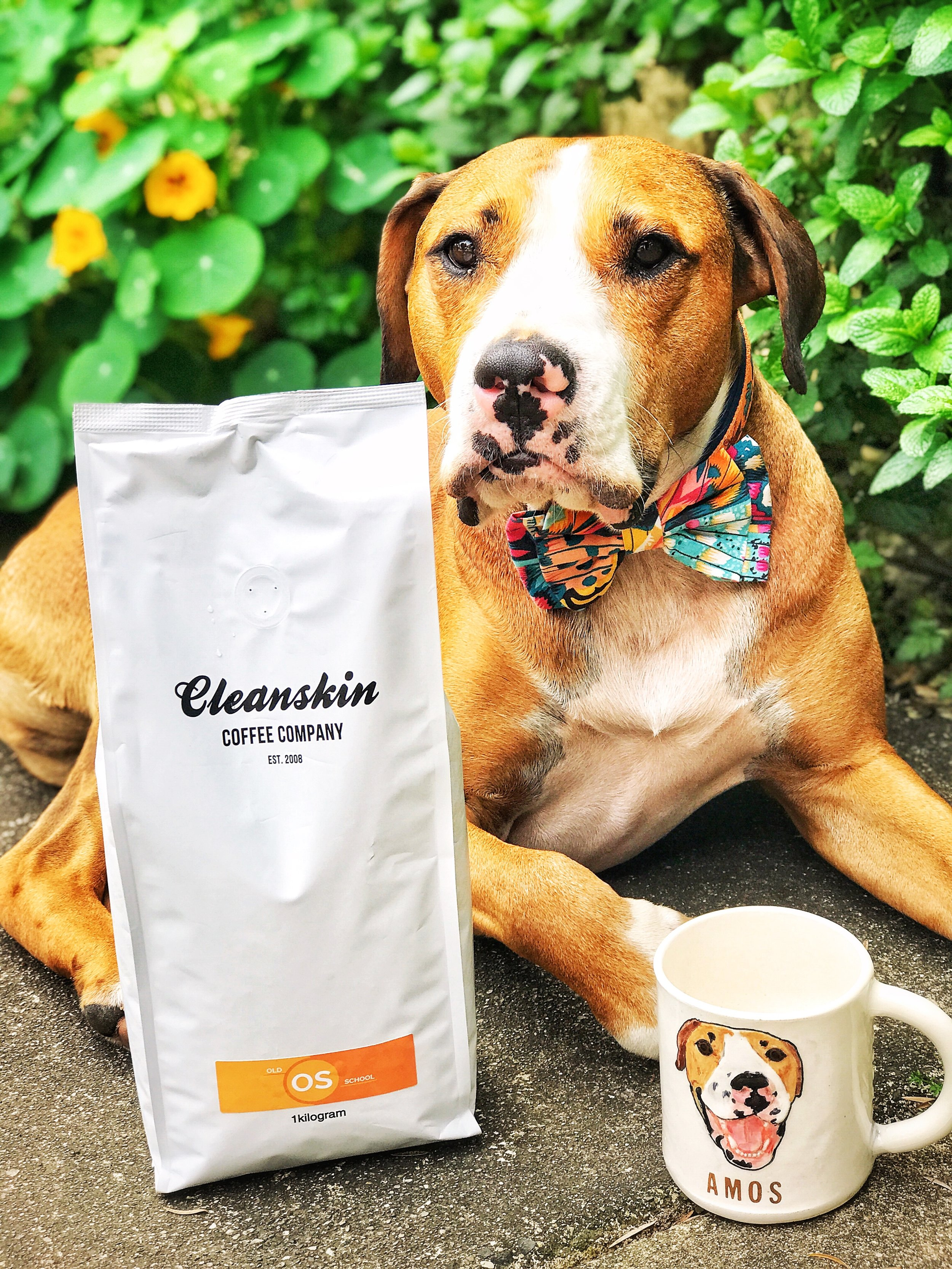 Waiting for his morning pick me up Mug by  Hadley Clay Studio and Bow Tie by  Bow Addo