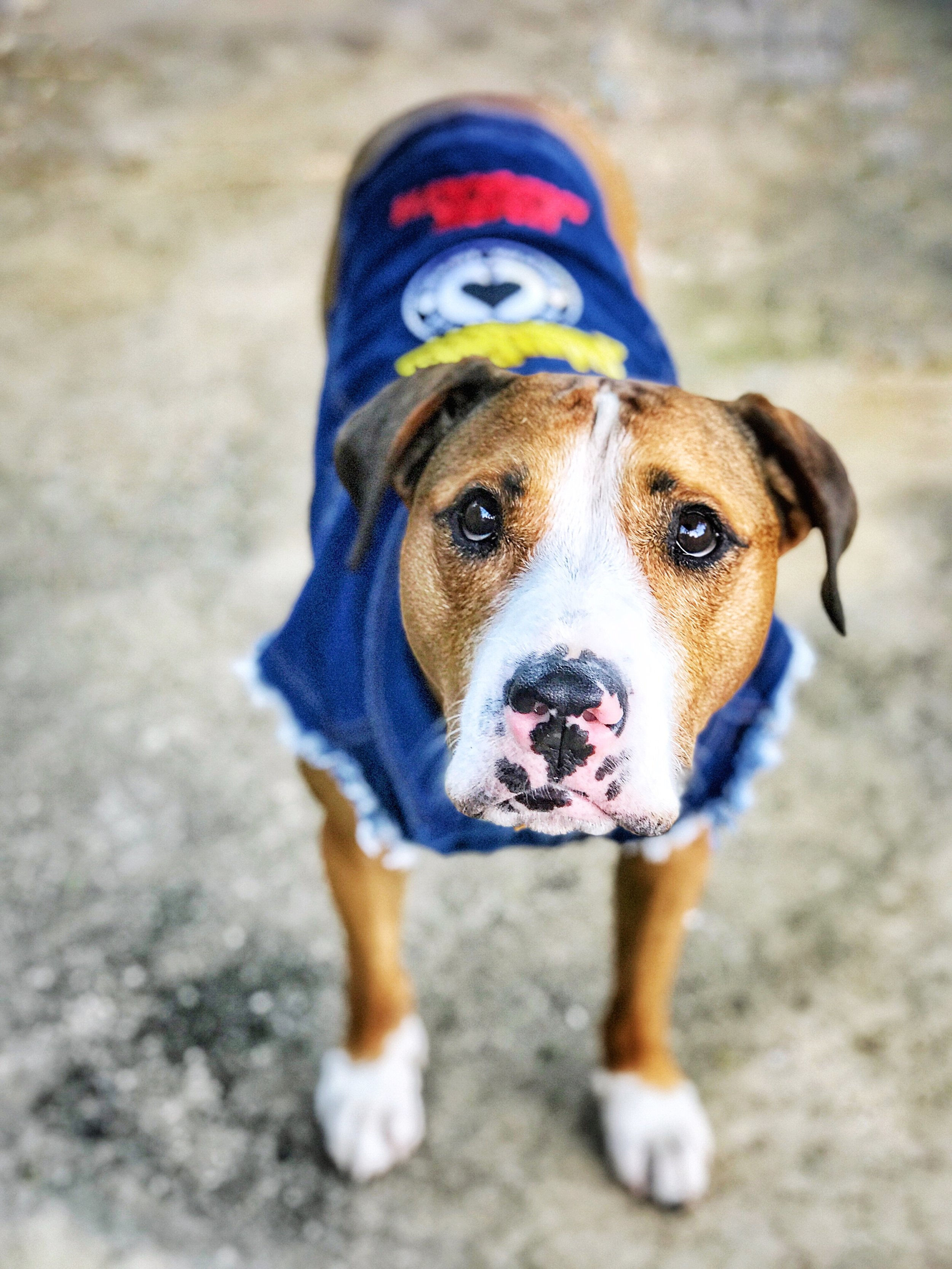 So mum, are you going to play with me now? Denim Jacket by  Pet Haus